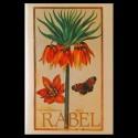 Daniel Rabel, cent fleurs et insectes