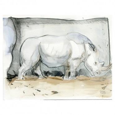 Rhino tête basse par Olivier Martin